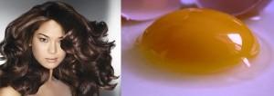 علاج الشعر بالبيض