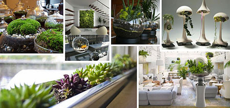 تزيين داخل المنزل بالنباتات1