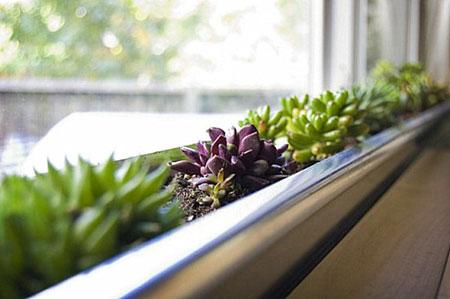 تزيين داخل المنزل بالنباتات11