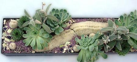 تزيين داخل المنزل بالنباتات10